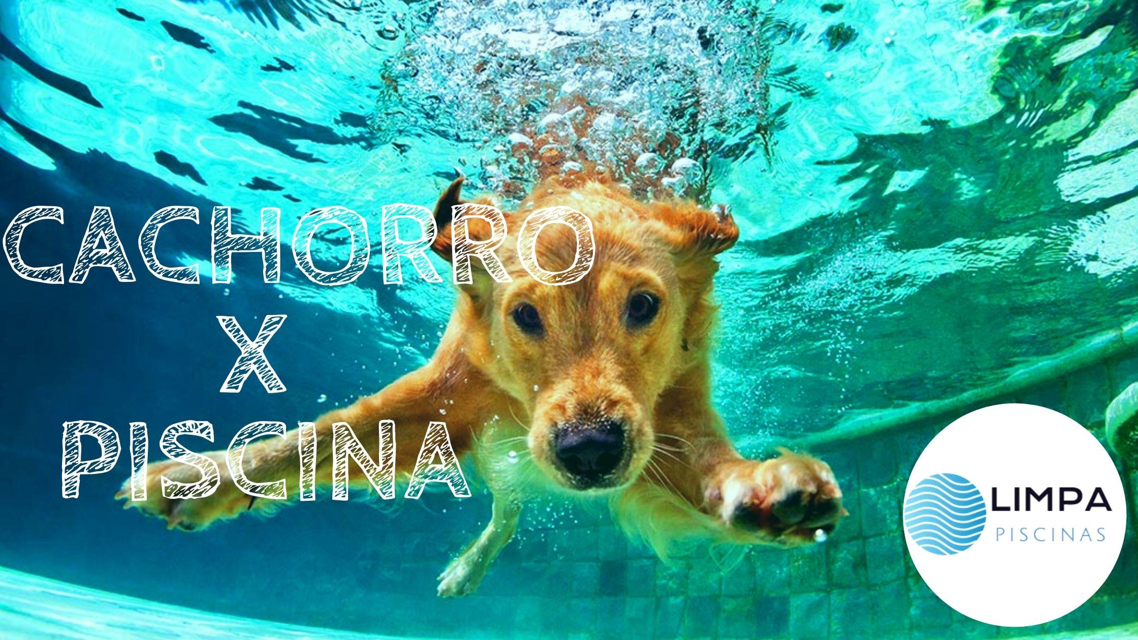 Cachorro e Piscina: Tudo o que Você Precisa Saber, Cachorro na Piscina Pode?